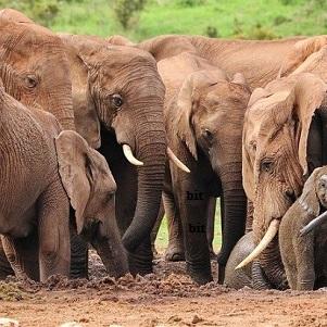 Nature-et-faune-en-Inde-4