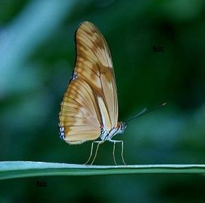 Nature-et-faune-en-Inde-7