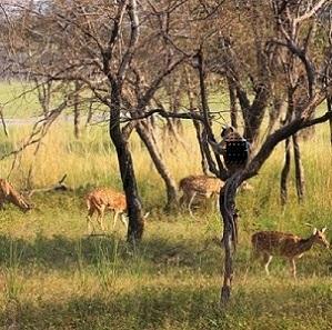 Safari-en-Inde-3