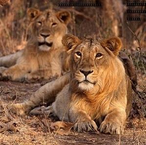Safari-en-Inde-6